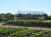 Fruit and vegetable cages, galvanized mild steel