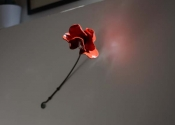 Tower of London Poppy (1)