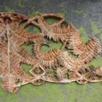 Three seat fern coalbrookedale 2