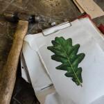 oak leaf illustration