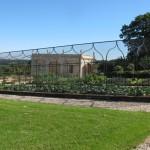 web_veg cage