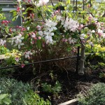 Step-over or espalier supports.