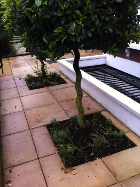 Bay Tree Planters London