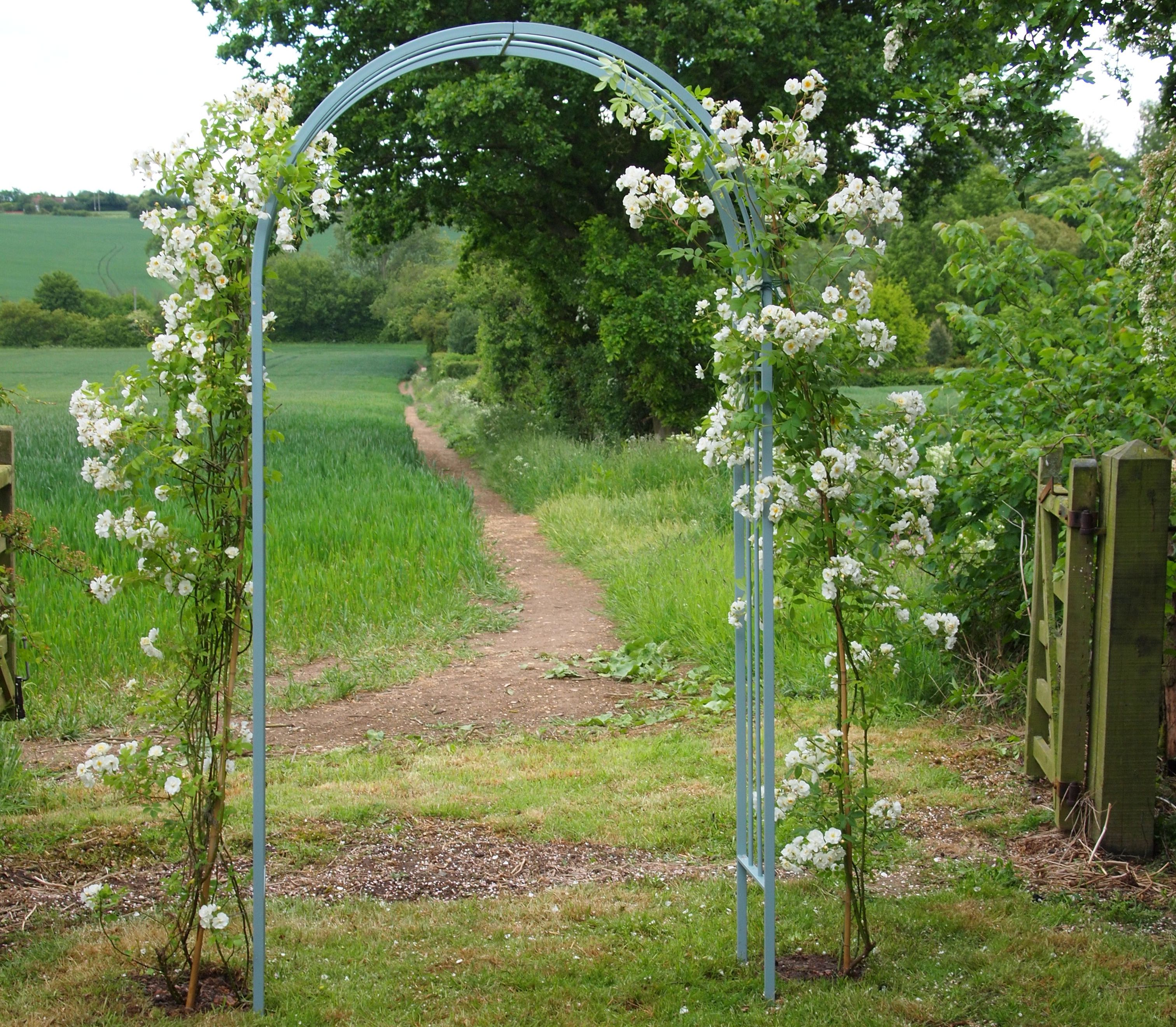 Classic Rose Arch