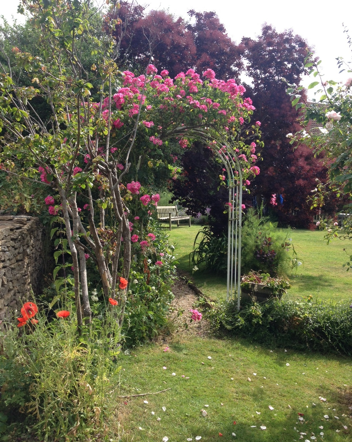 Rose arch crop