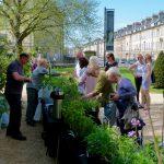 Holburne Plant Sale
